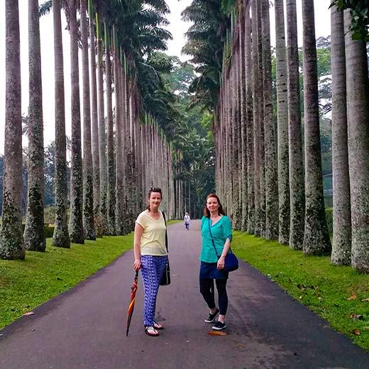 The botanical garden in peradeniya Kandy