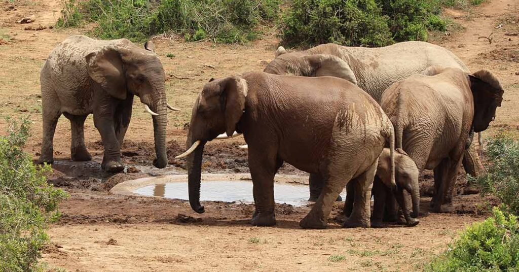 elephants_in_minneriya_national_park