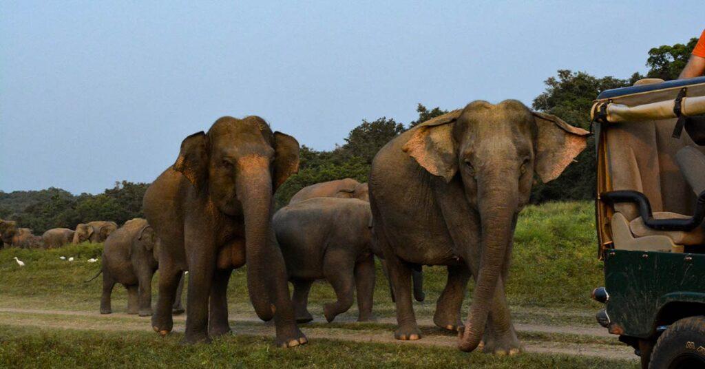 wilpattu_national_park_sri_lanka
