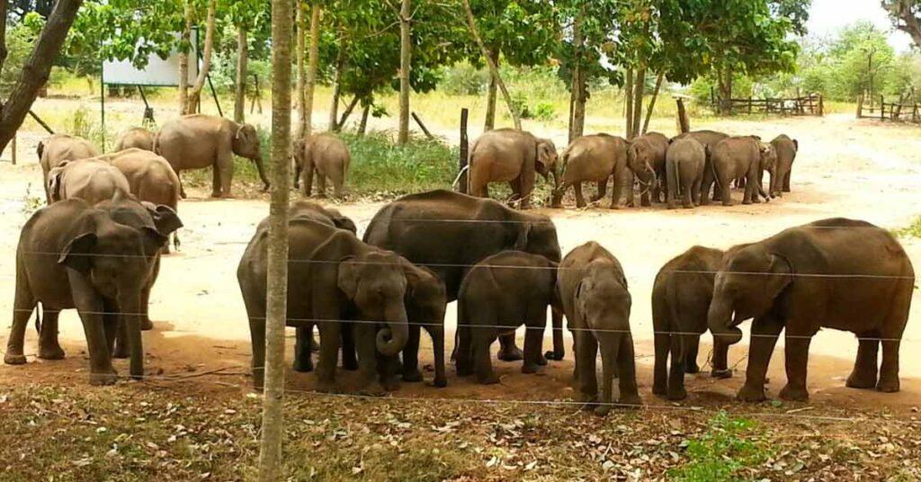 elephant-transit-home-udawalawe
